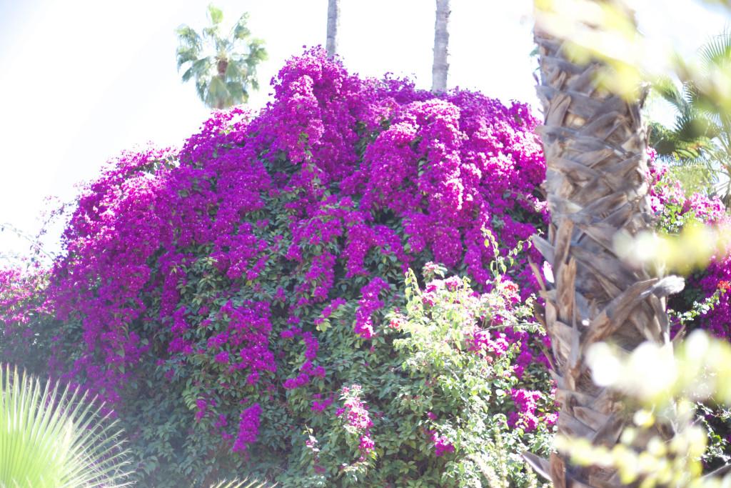 marrakech-traveldiary-tipps-fashionblog-reiseblog-sehenswüridgkeiten_1270