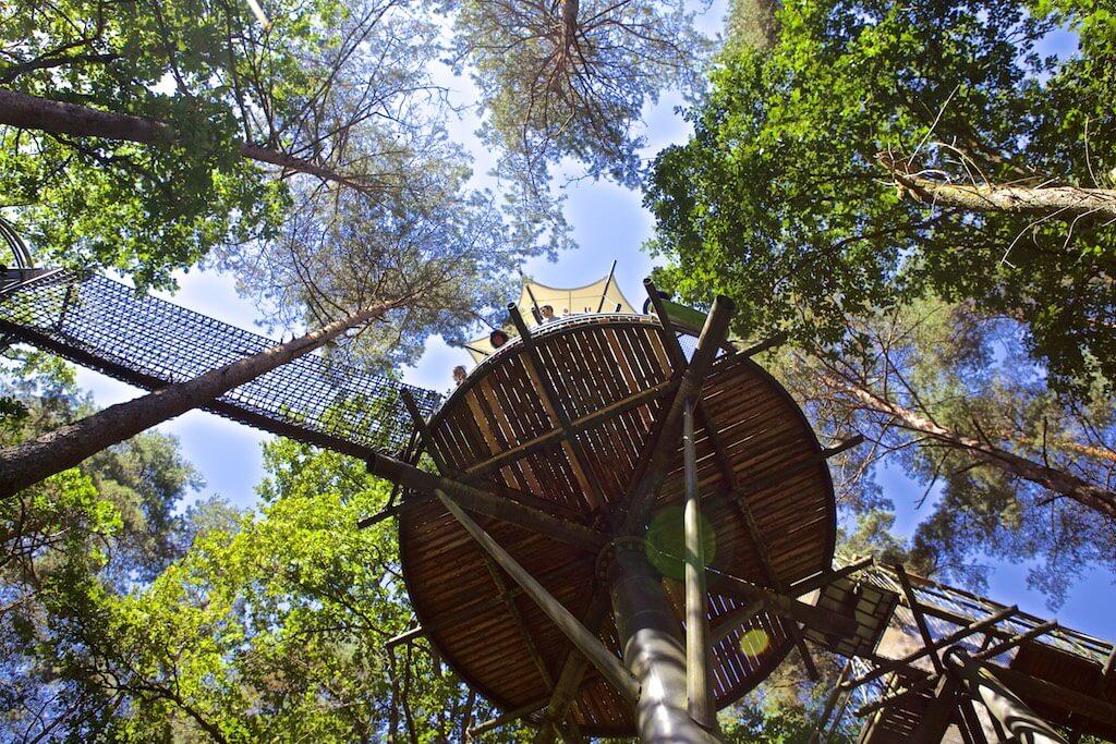 Pfälzerwald Baumwimpfelpfad